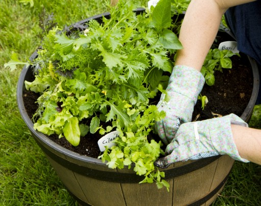 A green-fingered gardening enthusiast tends to a potted plant.