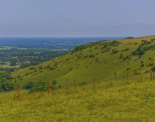 A luscious fence-lined hill in the South Downs National Park